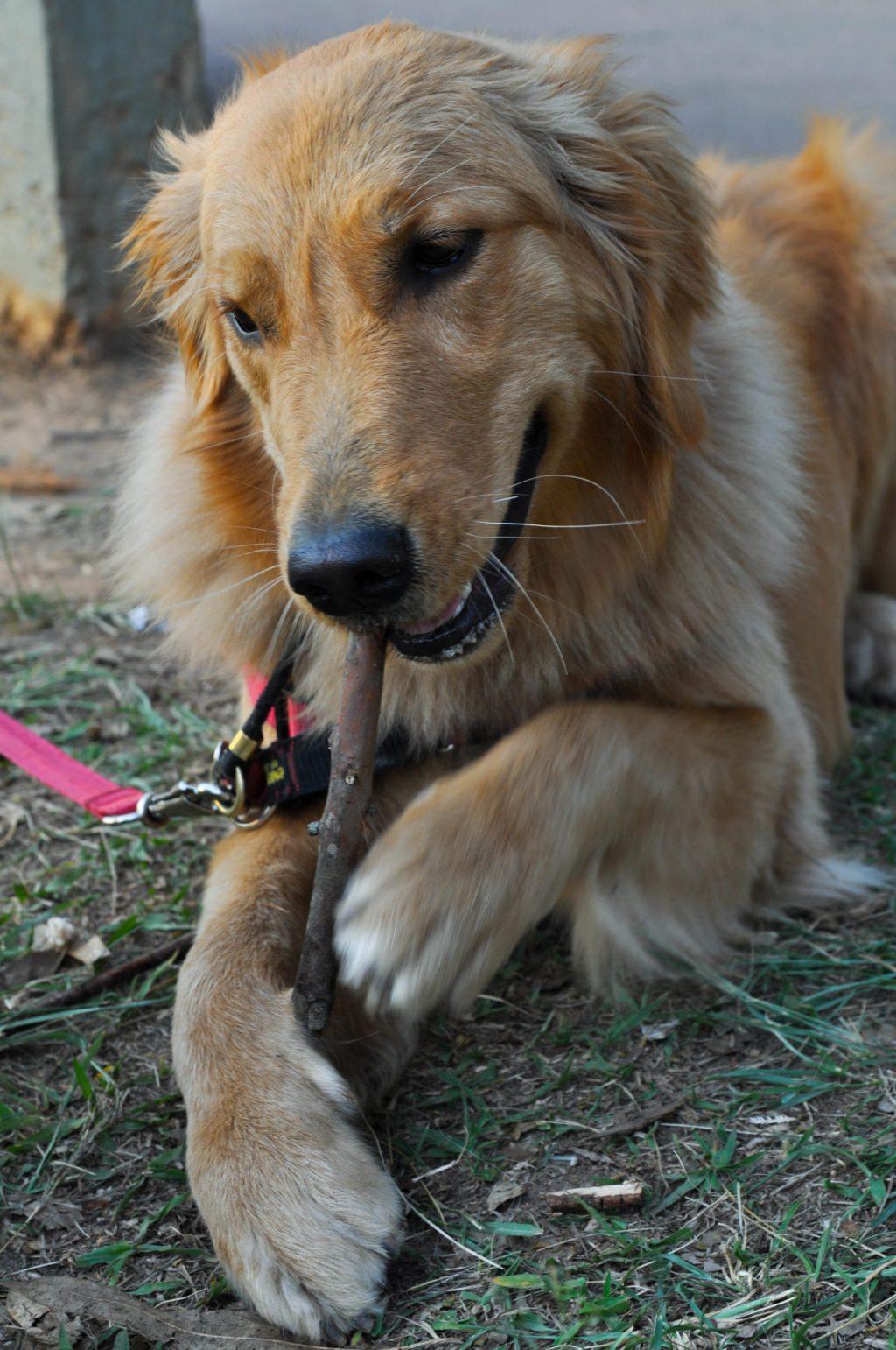 Spitz Fotografia Pet (1 de 1)-5