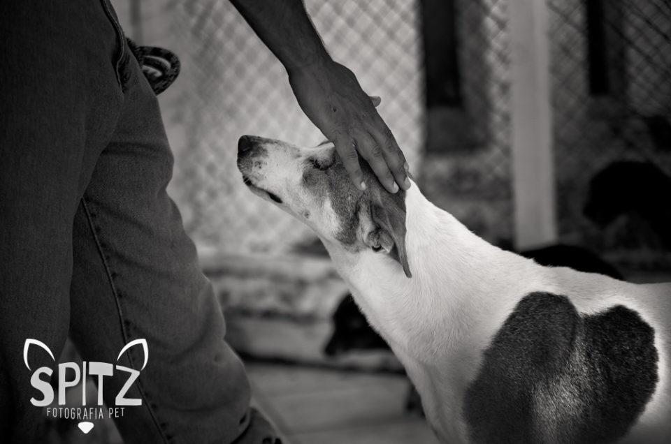 Calmante para cães com medo de fogos de artifício e ansiedade de separação: cuidado com o acepromazina !