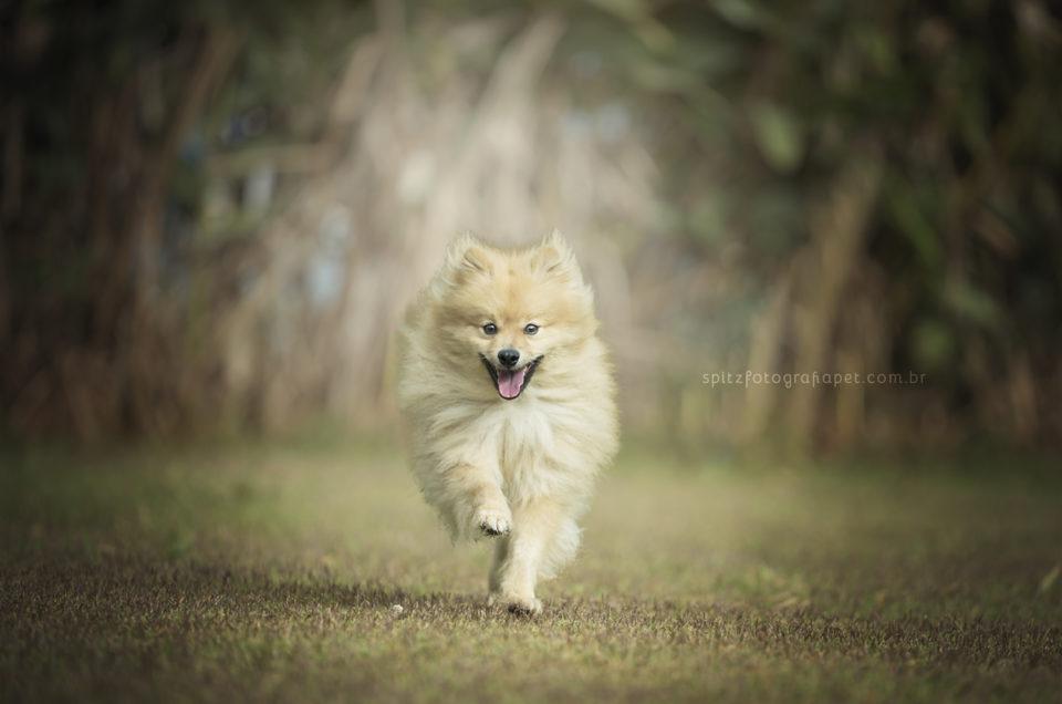 A importância do treino para viajar ao exterior com cachorro