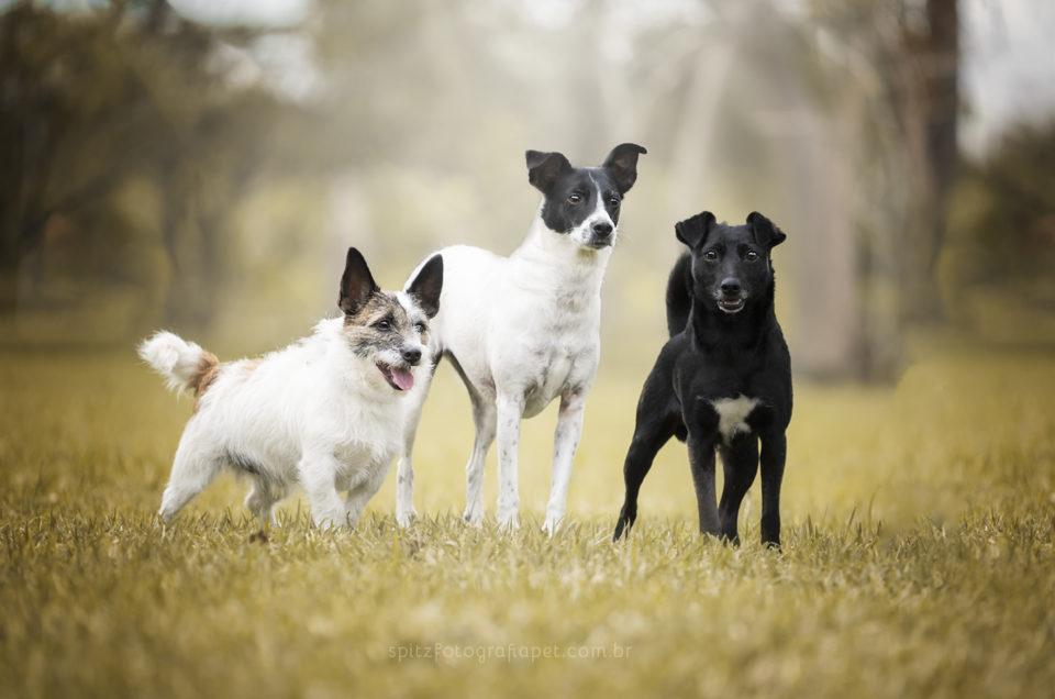 Ensaio Pet: Fred (Jack Russel Terrier), Rosinha e Nankin (SRD)