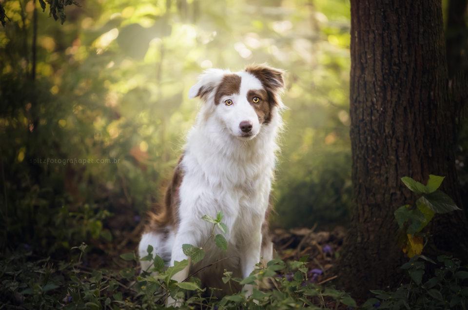 Quais as raças de cães mais inteligentes? E o que isso significa?