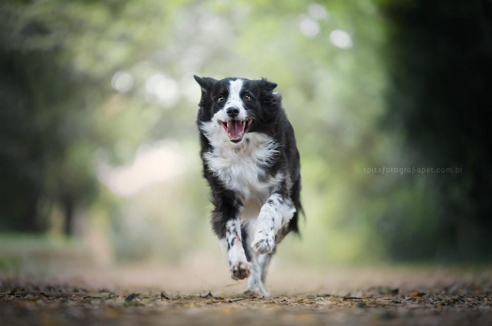Coronavírus e cães: eles estão imunes?