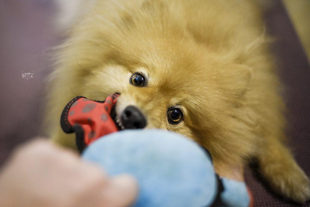 Brinquedo cachorro Kong pelúcia