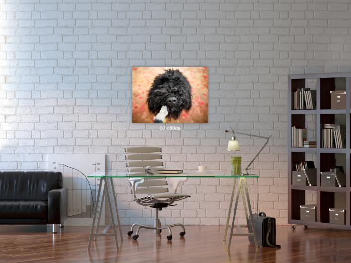 Canvas Spitz Fotografia Pet