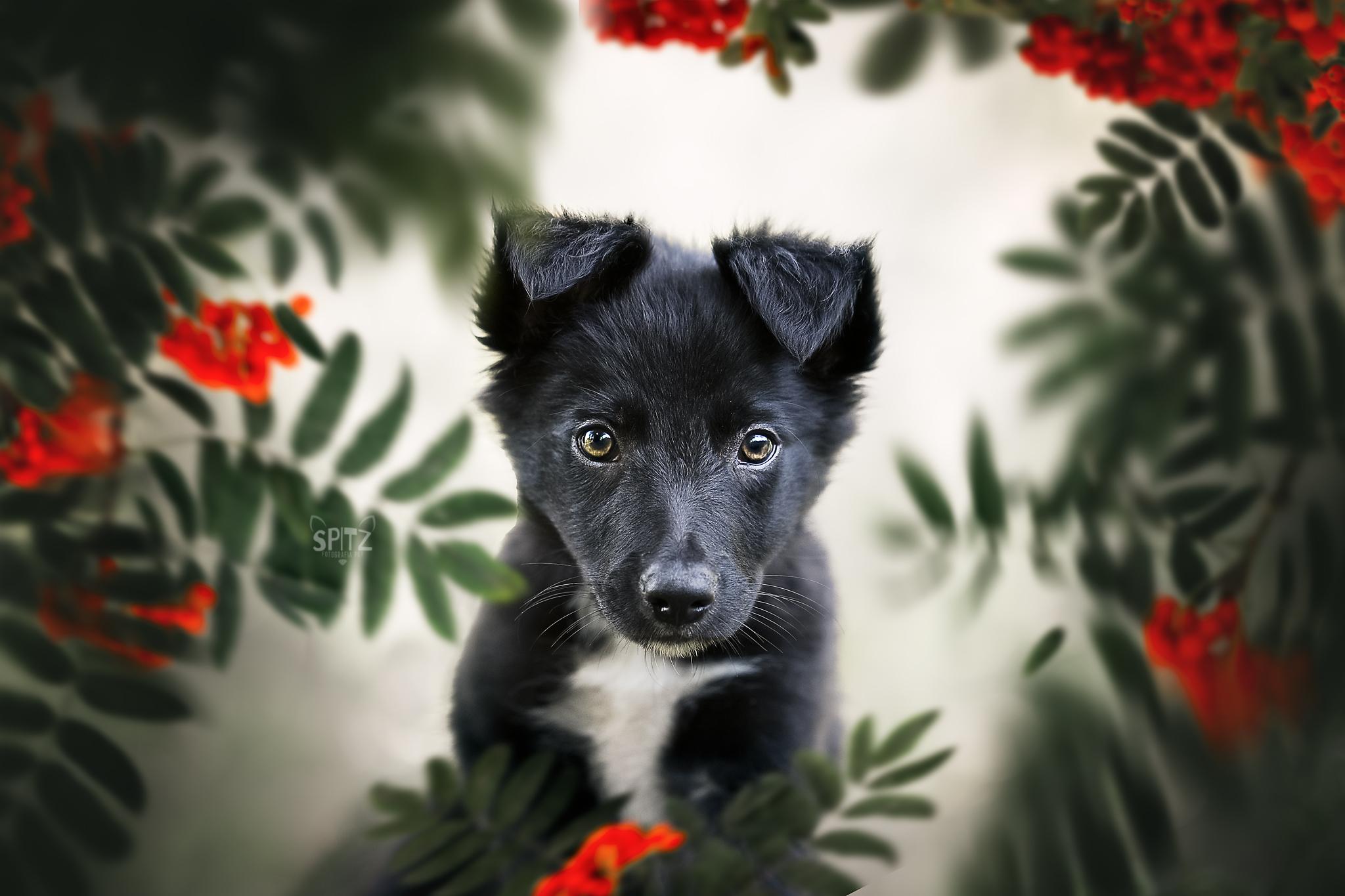 Módulo 2 - Cachorro: como lidar e seu comportamento
